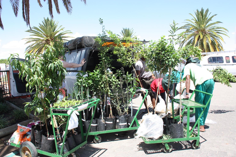 Verladen der Pflanzen