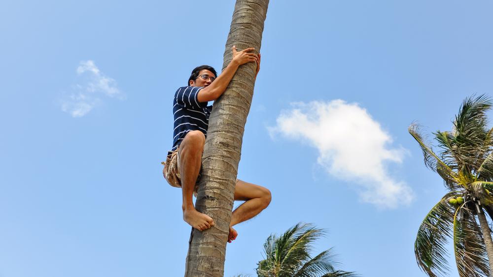 Wie Sie Ihre Kunden von der Palme holen